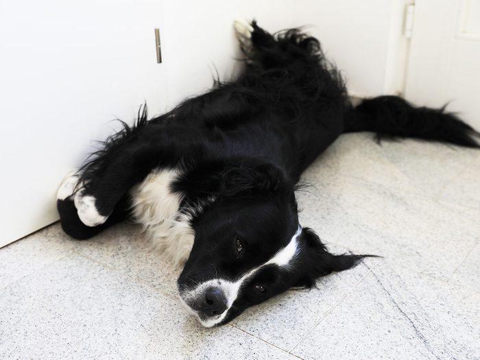 Une experte en communication animale a essayé de savoir ce que pense mon chien.
