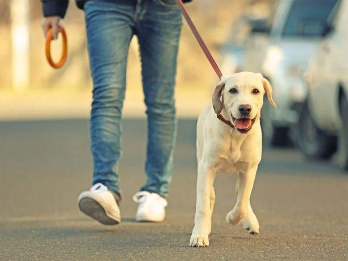 Marcher est un bon moyen de développer votre intelligence.