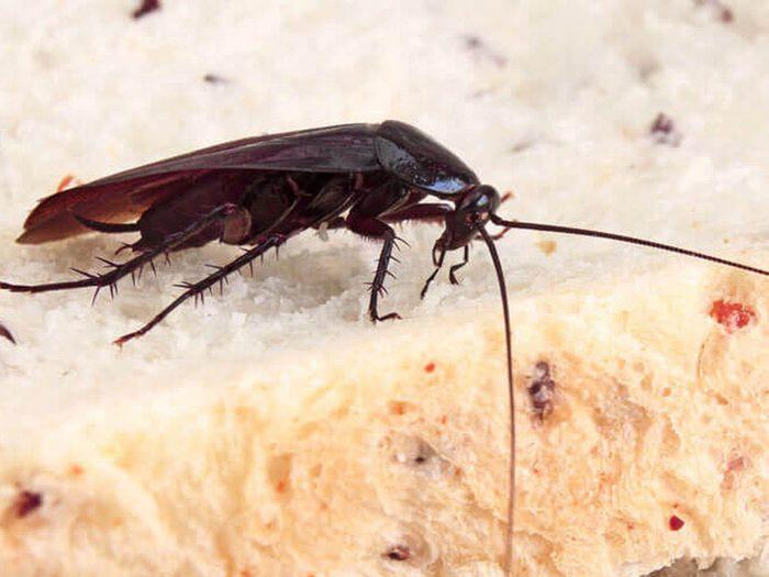 Comment se débarrasser des insectes tels que les coquerelles?