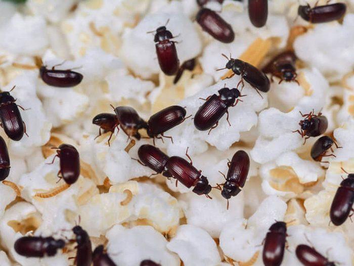 Comment se débarrasser des insectes tels que les vers de la farine?