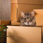 Déménager avec son chat: les conseils d'un «éduchateur»