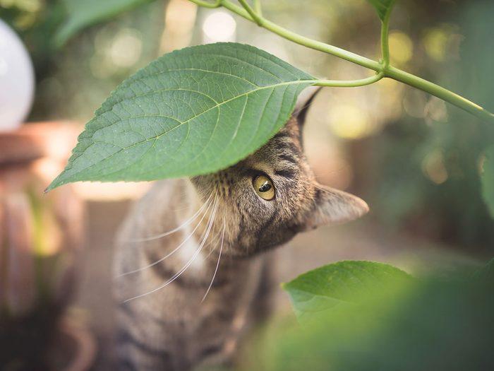 Voici 20 plantes qui sont toxiques pour les chats.