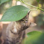 20 plantes qui sont toxiques pour les chats