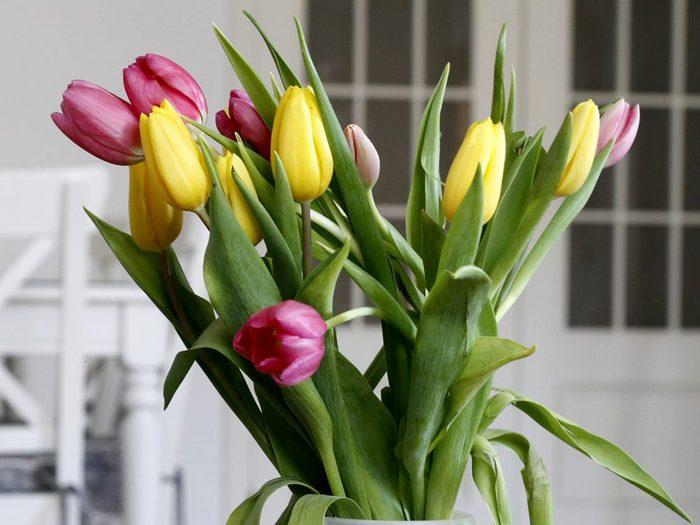 La tulipe fait partie des plantes qui sont toxiques pour les chats.