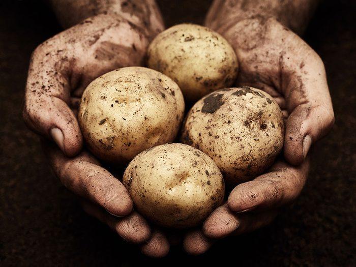 Les pommes de terre sont également naturellement sans gluten.