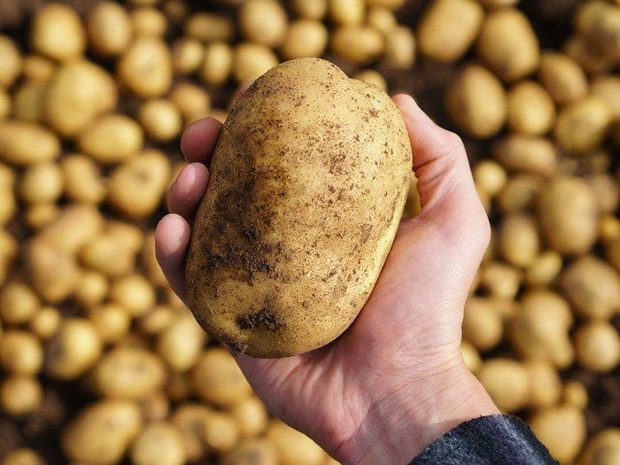 Voici 6 raisons pour lesquelles les pommes de terre sont bonnes pour la santé.