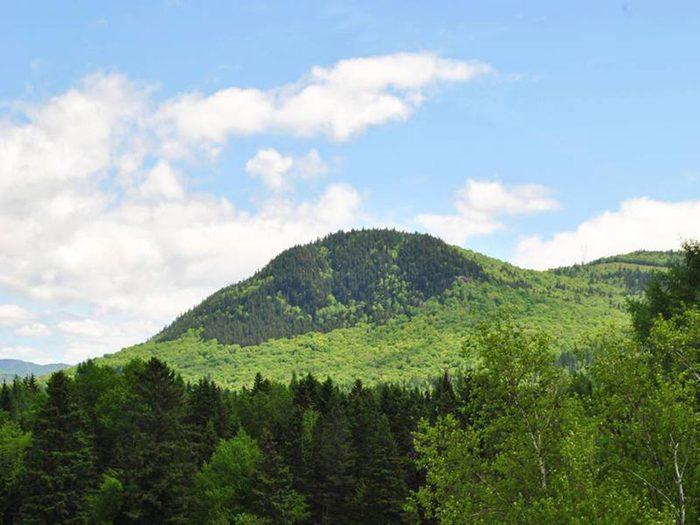 Le parc de la forêt ancienne du mont Wright fait partie des plus beaux sentiers pédestres pour faire de la randonnée avec son chien.