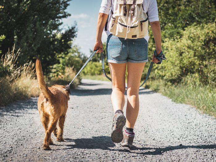 Le sentier national en Matawinie est l'un des plus beaux sentiers pédestres pour faire de la randonnée avec son chien.