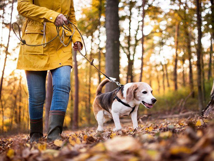 Les sentiers du Gouffre, des Florent et des Pointes font partie des plus beaux sentiers pédestres pour faire de la randonnée avec son chien.