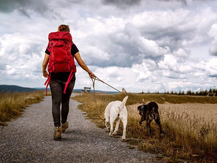 Le parc côtier Kiskotuk et l'île Verte est l'un des plus beaux sentiers pédestres pour faire de la randonnée avec son chien.