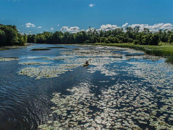 Le parc de la Rivière-des-Mille-Îles fait partie des plus beaux sentiers pédestres pour faire de la randonnée avec son chien.