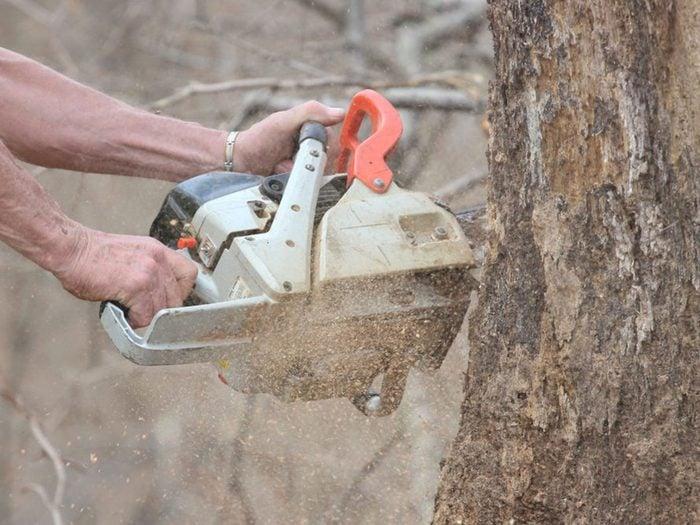 Éliminer un arbre pourrait être l'une des rénovations que vous regretterez probablement plus tard.