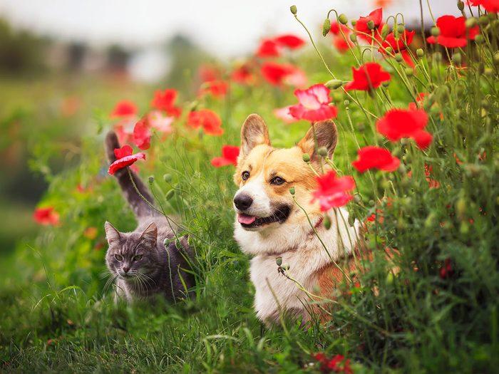 Sortir le chat ou le chien pour se débarrasser des écureuils.