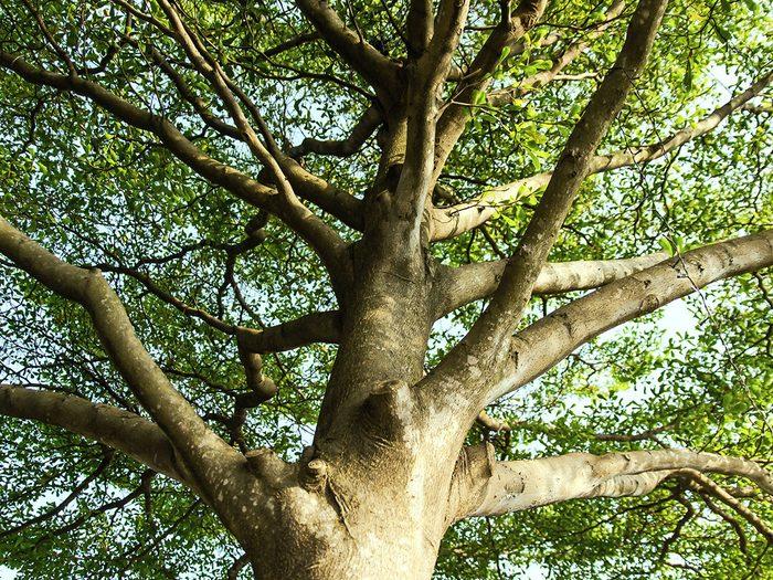 Bloquer les accès aux arbres pour se débarrasser des écureuils.