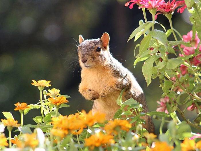 Comment se débarrasser des écureuils pour de bon?