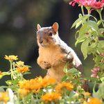 Comment éloigner les écureuils pour de bon