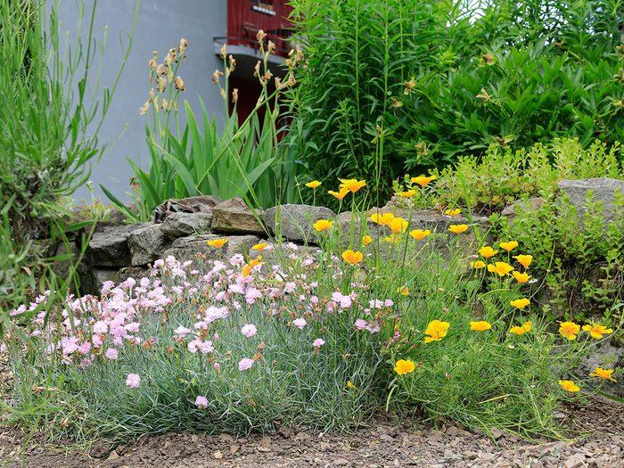 Éviter les plantes graminées pour se débarrasser des écureuils.