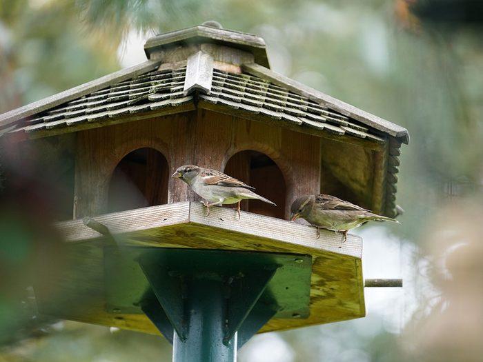 Éloigner la mangeoire à oiseaux pour se débarrasser des écureuils.
