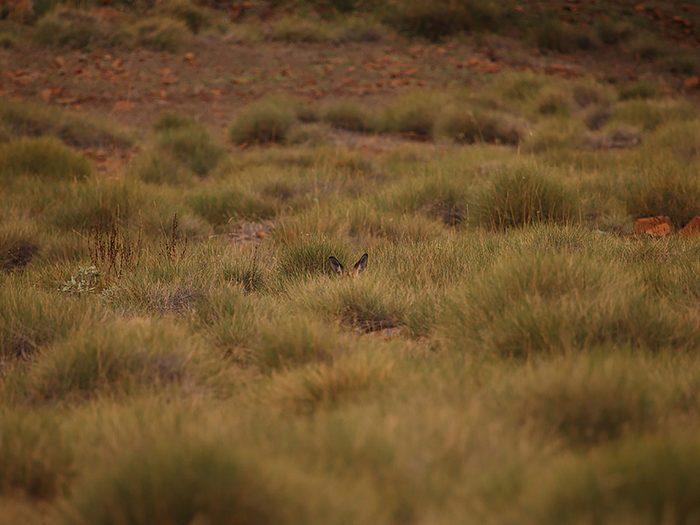 Animaux cachés: un kangourou se trouve sur cette photo, pourrez-vous le trouver?