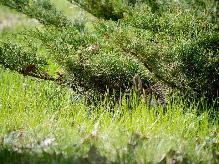 Animaux cachés: un lapin se trouve sur cette photo, pourrez-vous le trouver?