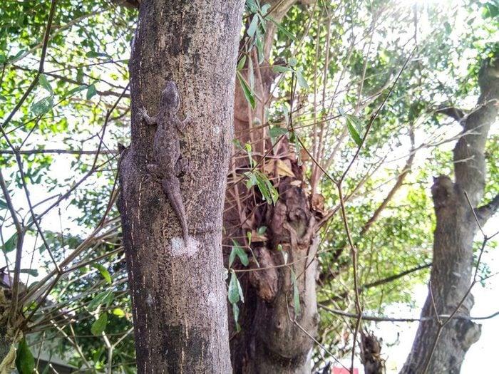 Animaux cachés: un lézard se trouve sur cette photo, pourrez-vous le trouver?