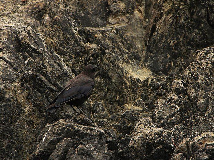 Animaux cachés: un corbeau noir se trouve sur cette photo, pourrez-vous le trouver?