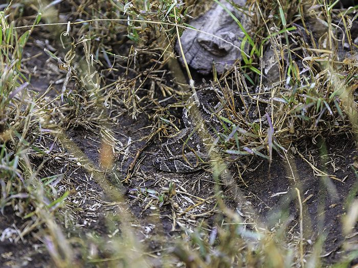 Animaux cachés: un serpent se trouve sur cette photo, pourrez-vous le trouver?