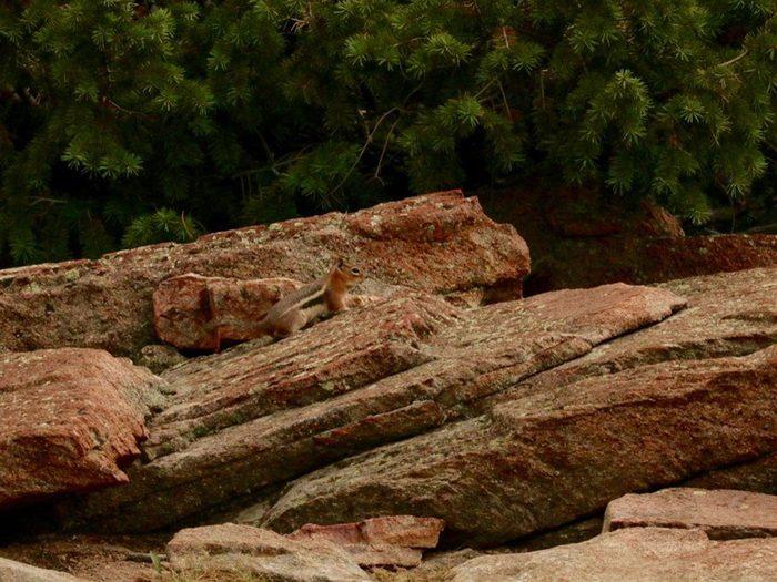 Animaux cachés: un tamia (chipmunk) se trouve sur cette photo, pourrez-vous le trouver?