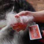 25 races de chiens qui ne perdent pas (trop) leurs poils