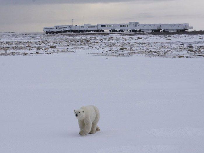 Passez la nuit dans un hôtel insolite avec les ours polaires.