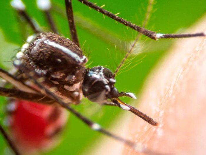 Les moustiques font partie des insectes domestiques les plus dégoûtants.