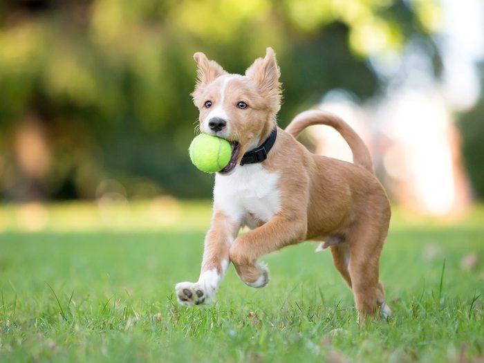 Comment régler le problème de trop plein d'énergie de votre chien?