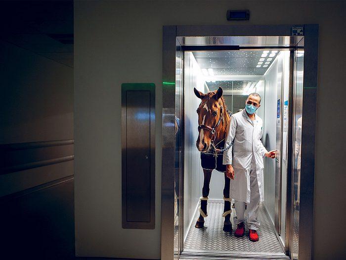Les effets thérapeutiques des chevaux font partie des bonnes nouvelles à découvrir.