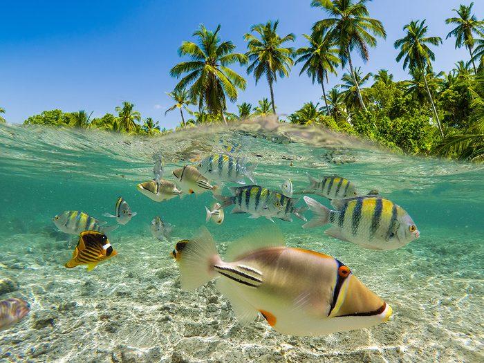 La renaissance des récifs coralliens fait partie des bonnes nouvelles à découvrir.