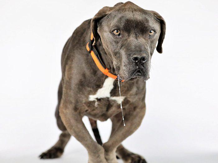 Grendel est l'un des chiens les plus laids du monde.