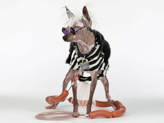 Rascal Deux est l'un des chiens les plus laids du monde.