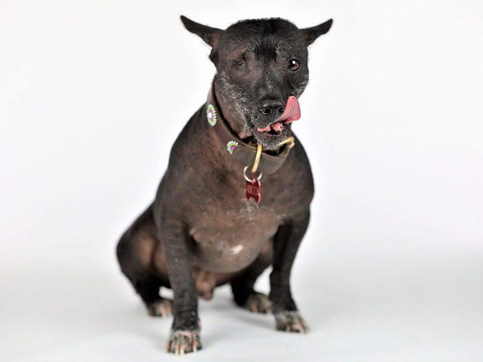 Rico est l'un des chiens les plus laids du monde.