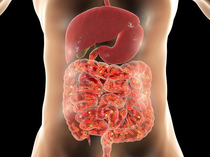 L'importance d'un intestin en bonne santé.