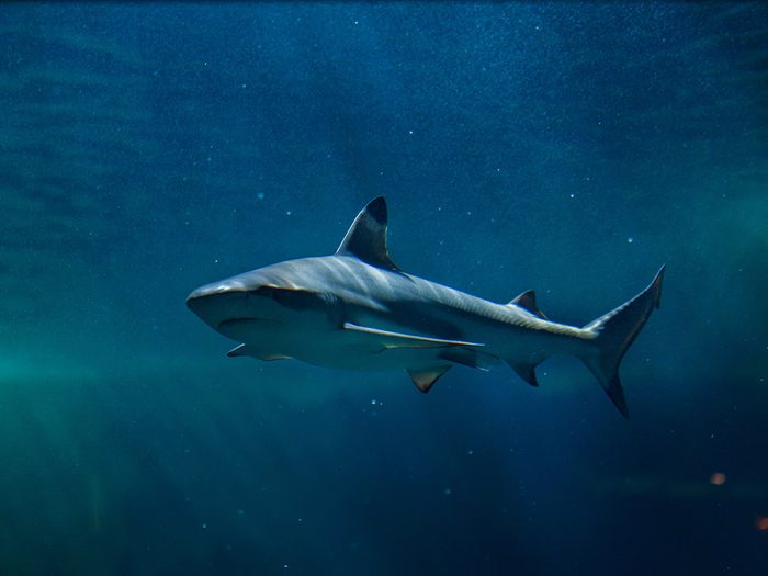 Perdu en mer, Brett a fait une terrifiante rencontre avec un requin.