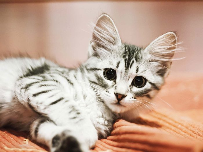 Adopter un chien de refuge c'est aussi savoir qu'il peut courir après le chat ou se battre avec un autre chien.