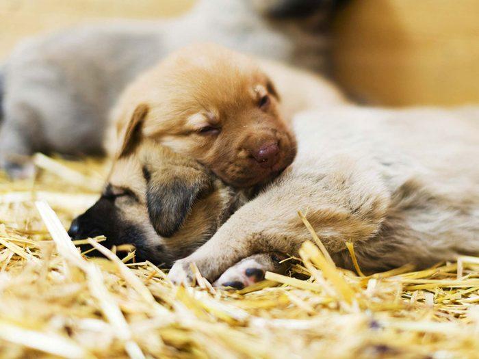 Adopter un chien de refuge c'est aussi savoir qu'il ignore qu'il a été «sauvé».