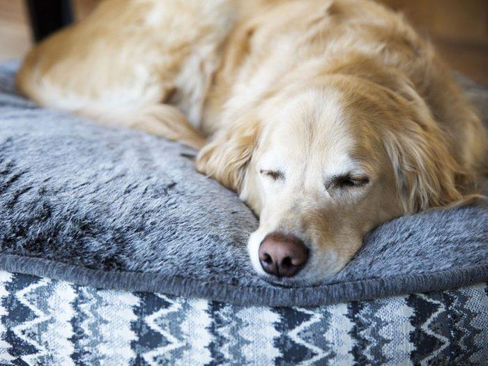 Adopter un chien de refuge c'est aussi faire en sorte qu'il se sente bien chez lui.