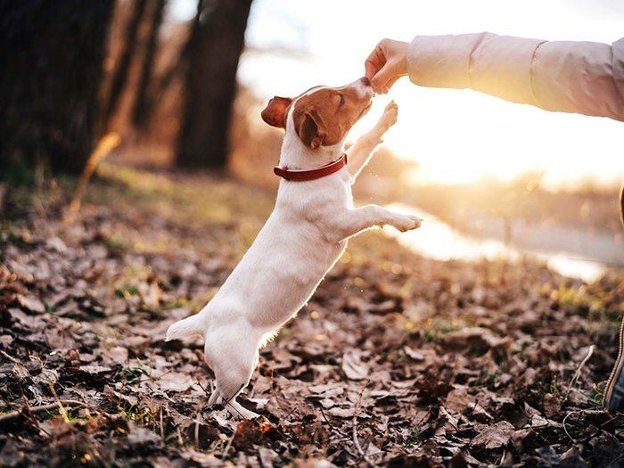 Adopter un chien de refuge c'est aussi savoir qu'il aura besoin de cours d'obéissance.