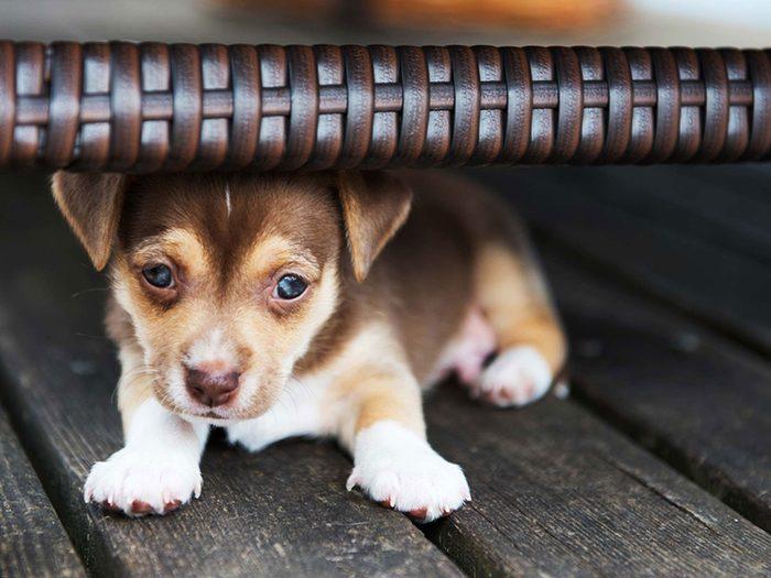 Adopter un chien de refuge c'est aussi accepter qu'il puisse avoir peur.