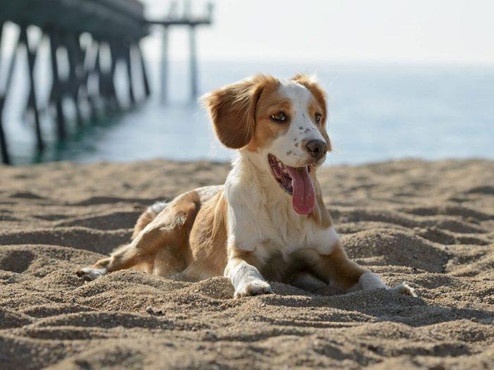 Adopter un chien de refuge c'est aussi penser à lui faire injecter une micropuce sous la peau.