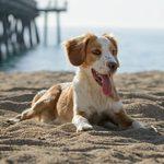 20 choses à considérer avant d'adopter un chien de refuge