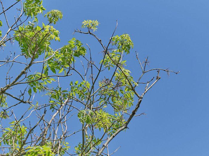 L'examen d'un arbre malade par un arboriculteur se fait de haut en bas, chose que vous pouvez faire vous aussi.