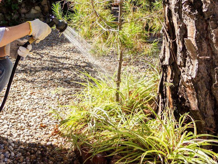 L'assèchement des feuilles peut vouloir dire que votre arbre est malade.