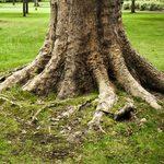 Comment reconnaître un arbre malade