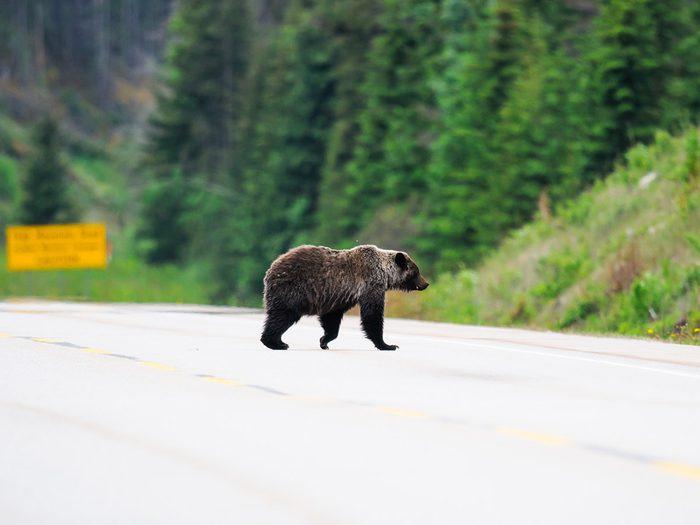 Colin est hanté par le souvenir de l'attaque de grizzly.